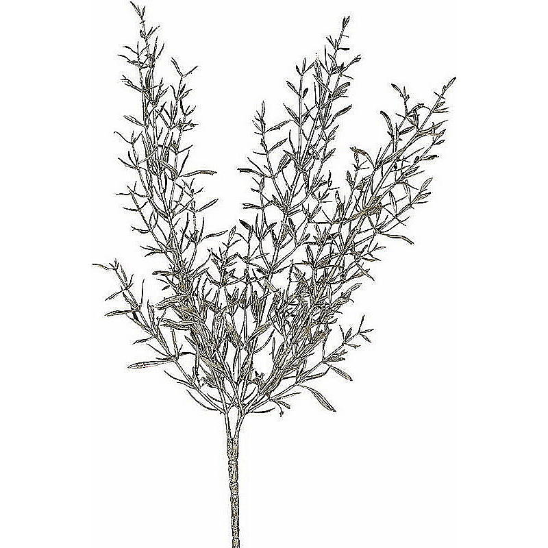 asparagusbusch g nstig online bestellen. Black Bedroom Furniture Sets. Home Design Ideas