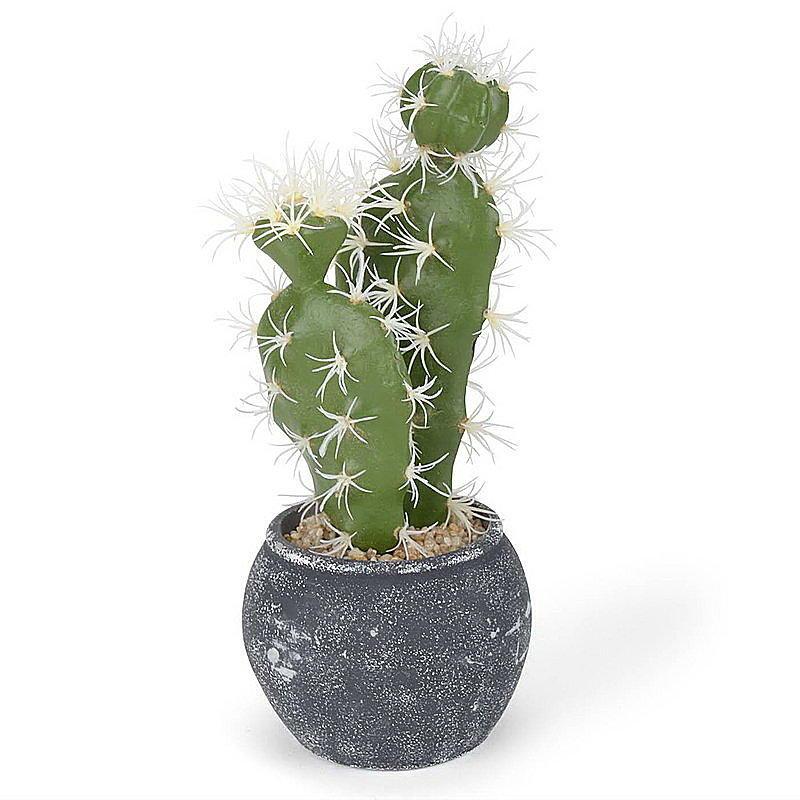 kaktus im topf h he 25 cm g nstig online bestellen. Black Bedroom Furniture Sets. Home Design Ideas